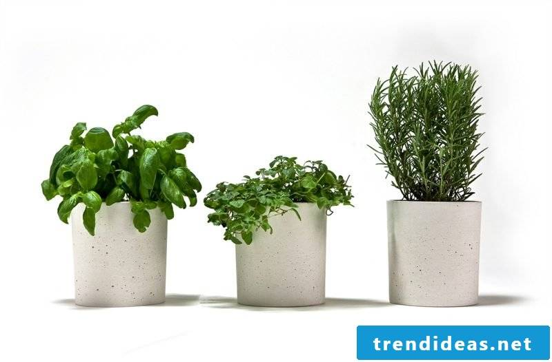 Concrete planter 3er