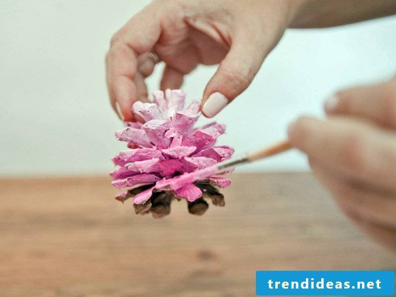 Tinker with pine cones in pink