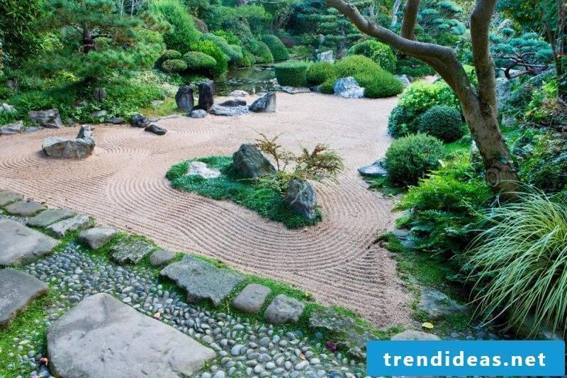Plant species Zen garden