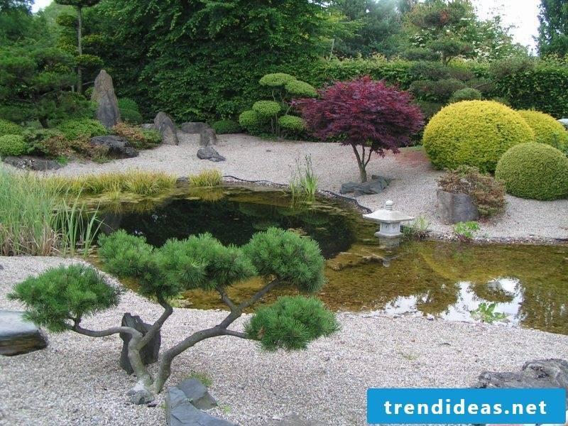 Zen garden plant species