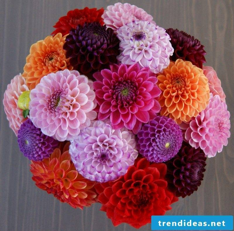 Bridal bouquet dahlias