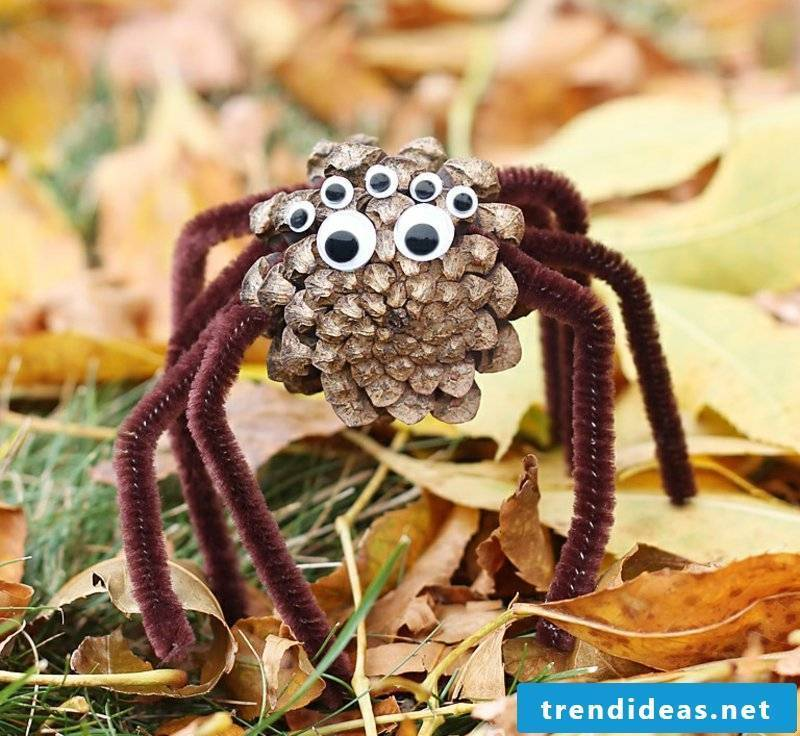 Tinker with pine cones spider