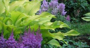 6 species of shade plants for a beautiful garden