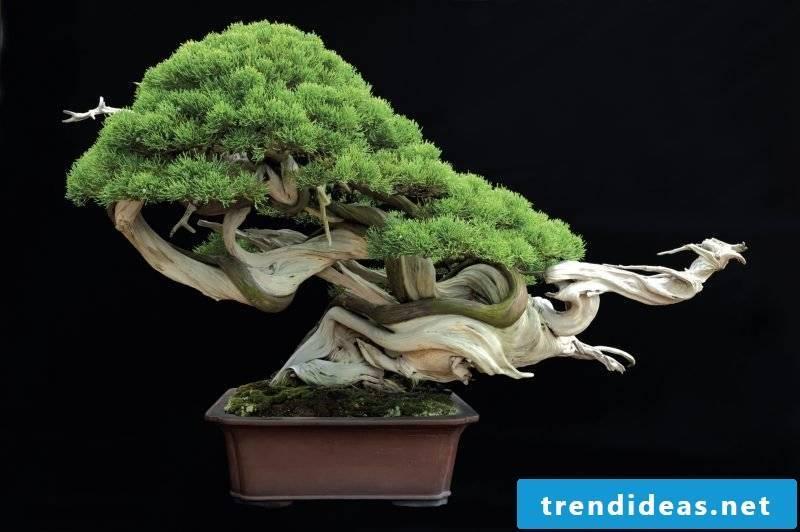 Bonsai species design