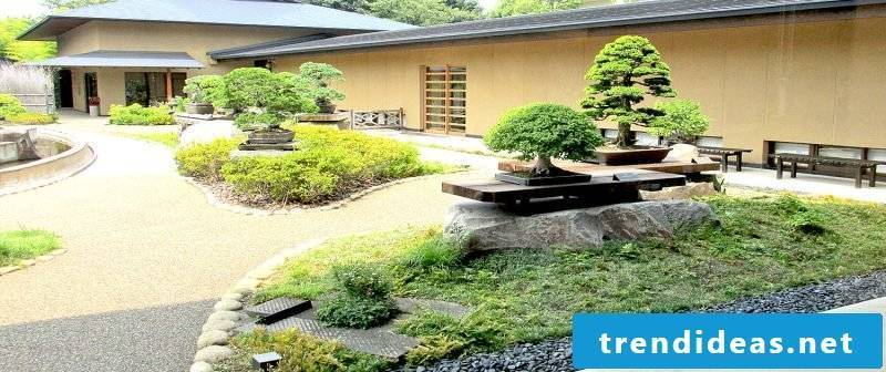 Bonsai species garden