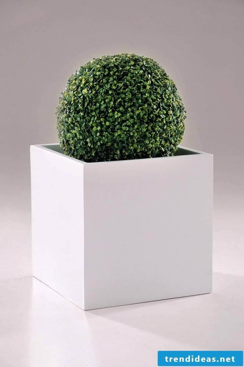 planting cube mega