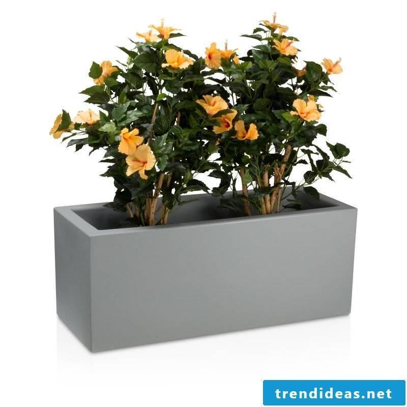 planter flowers