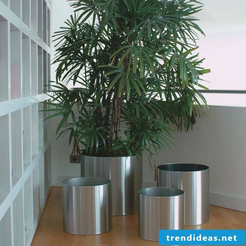 planting cubicle in common