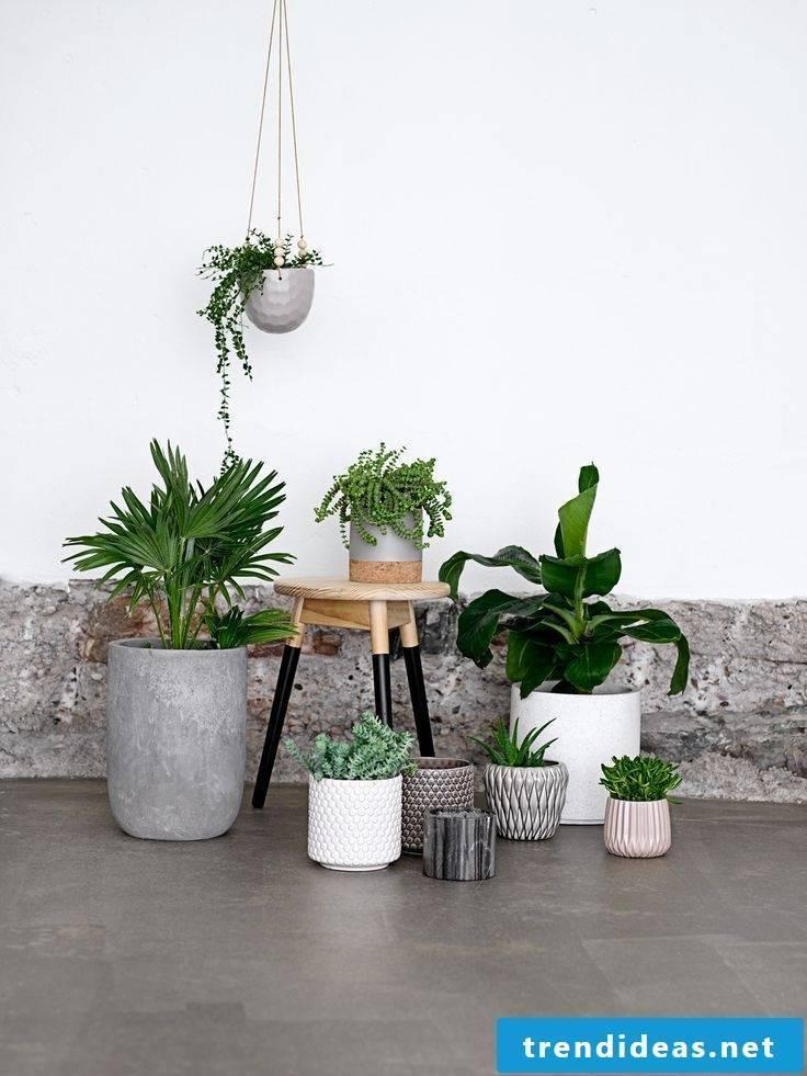 planting cube popular