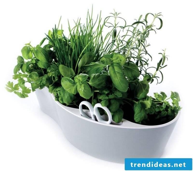 planter original