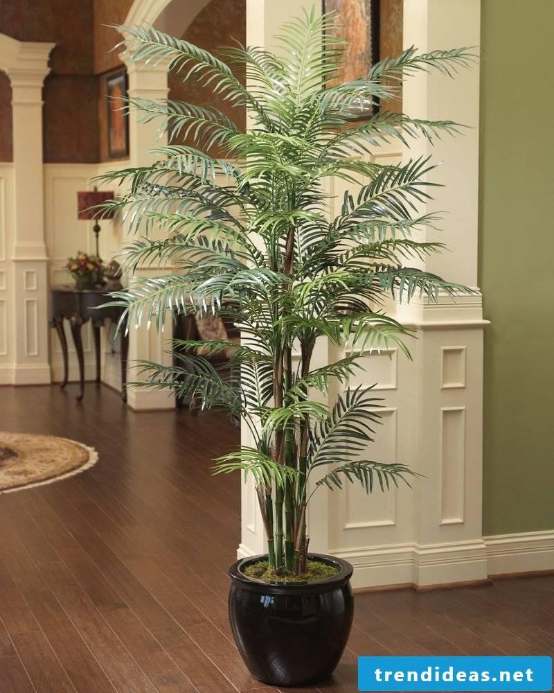 Palm in hallway