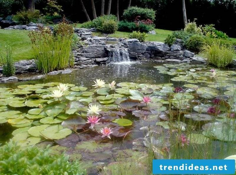 Creek and decorative garden pond with water lilies