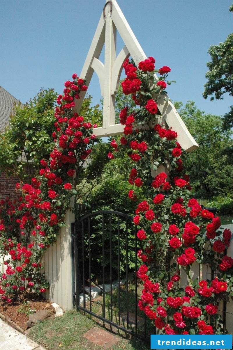 Build garden gate yourself and plant with climbing roses