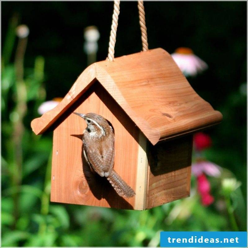 Build nesting box yourself!