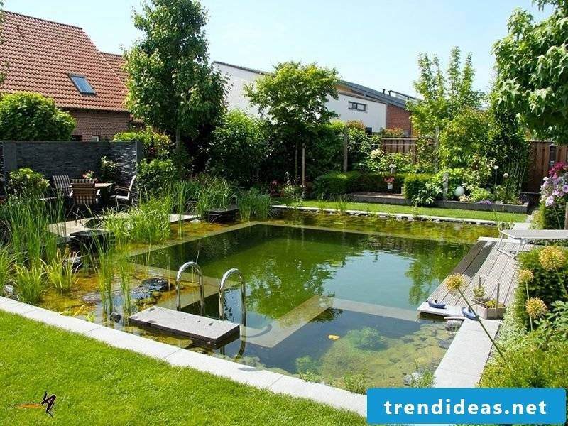 Swimming pond itself build alive