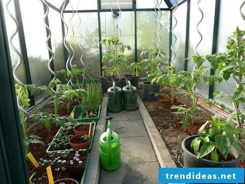 Greenhouse itself build step by step