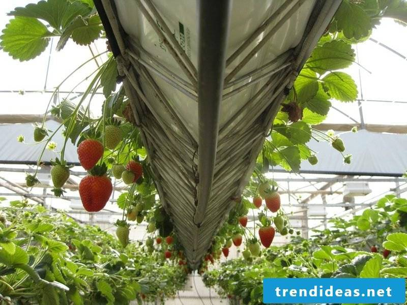 DIY ideas to build a greenhouse