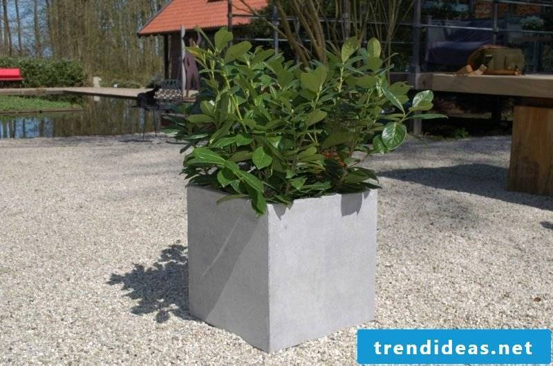 Planter concrete square shape