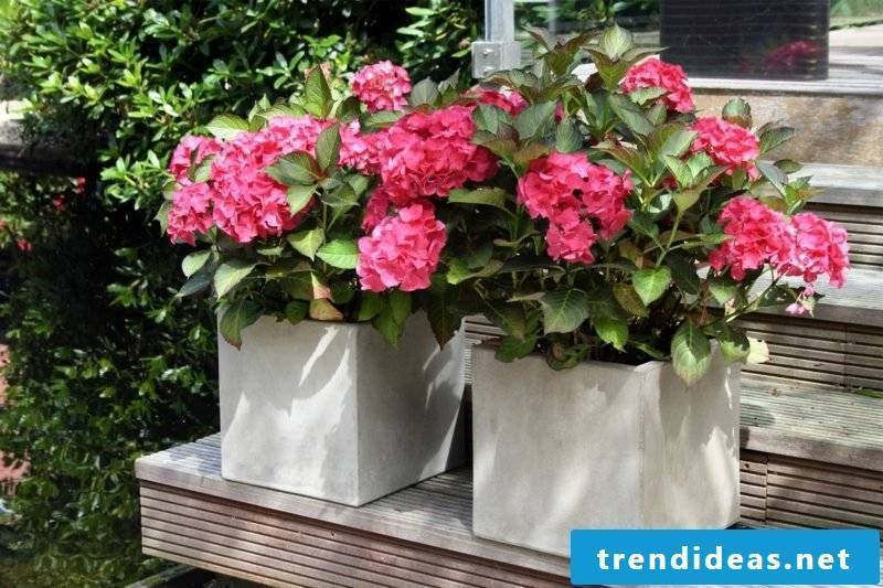 Flower tub concrete square shape