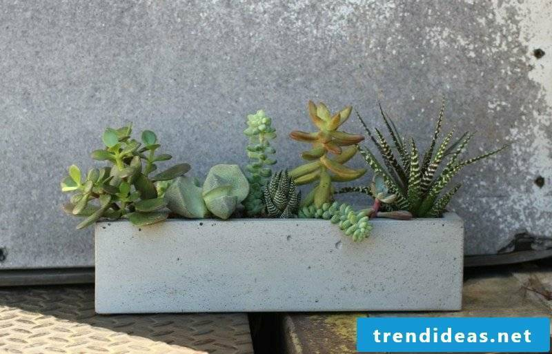 Concrete planter