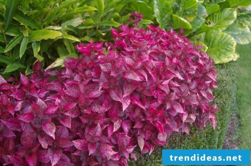 Front garden plants create great ideas