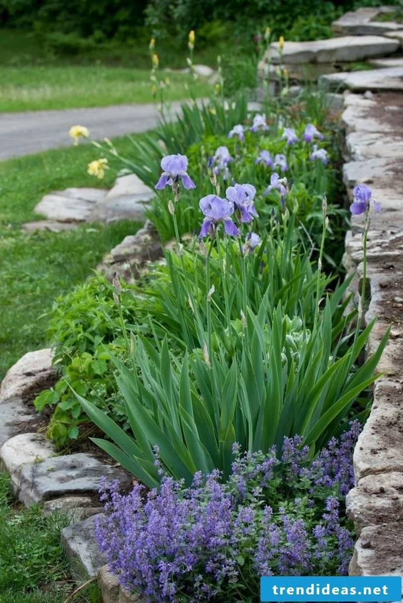 Front yard frame flowers irises