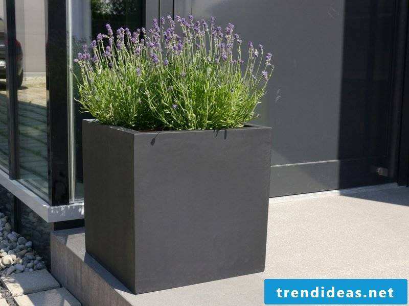 concrete planter anthracite