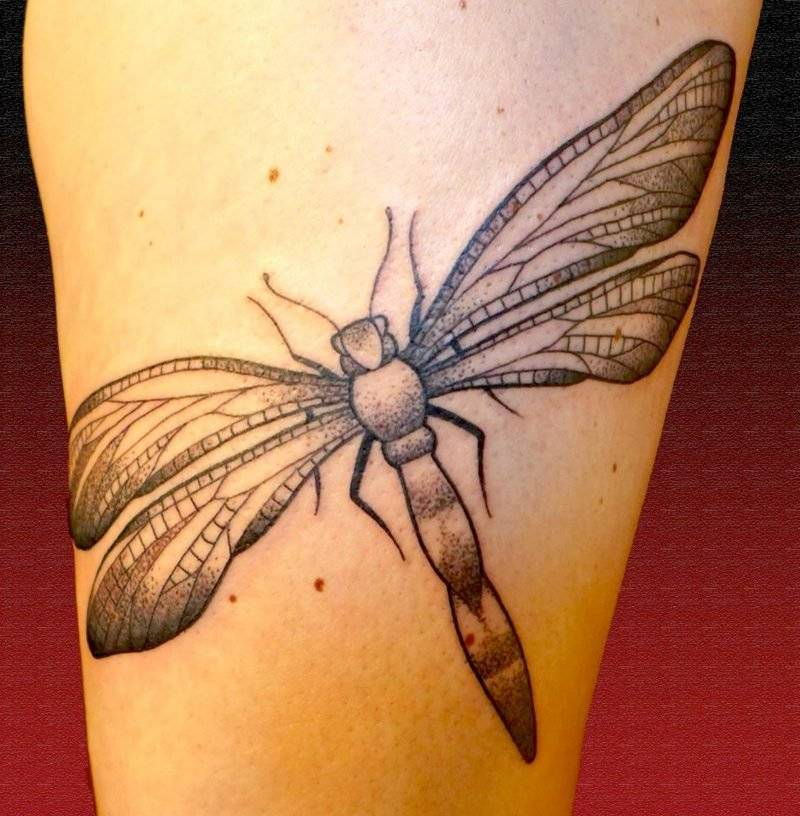 original tattoo motif dragonfly