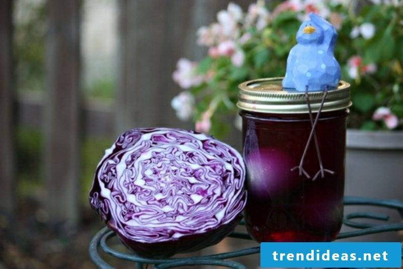Easter eggs color with natural colors. Plant red cabbage