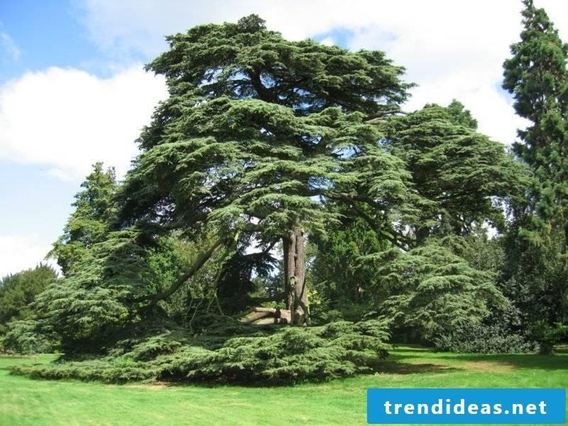 evergreen-baume-warwick_mediaeval_castle_662951_o
