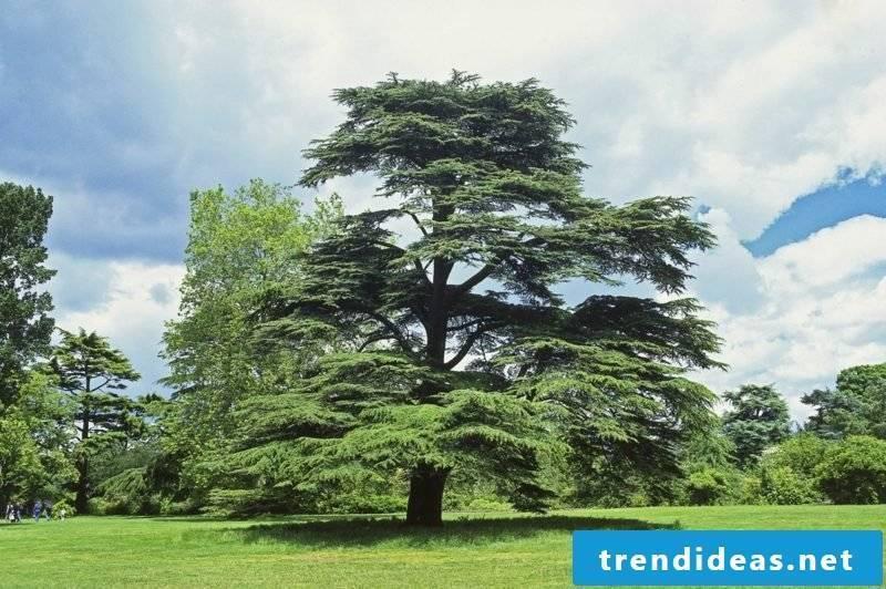 evergreen-baume-dctm_penguin_uk_dk_al236983_fdc1sj