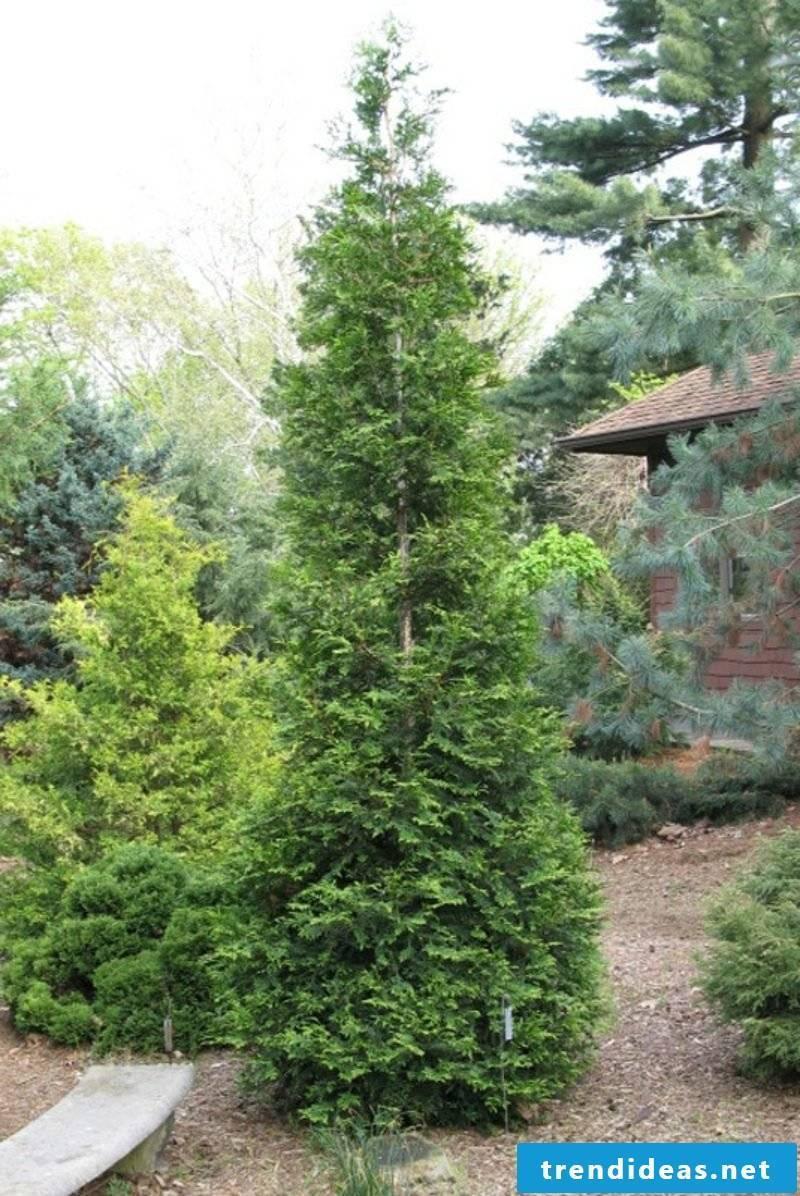 evergreen-baume-50a0ea