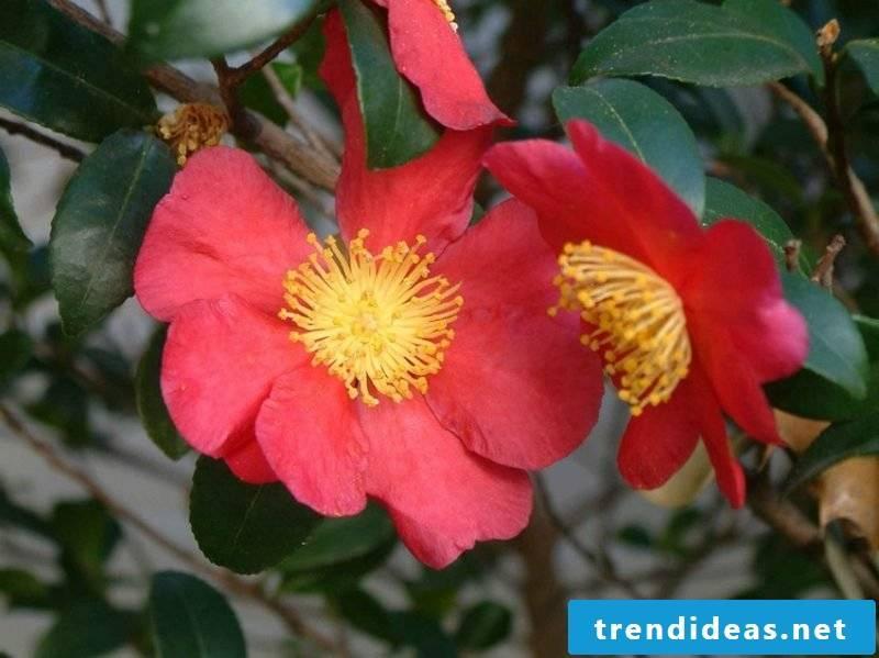 Feng Shui garden plant species