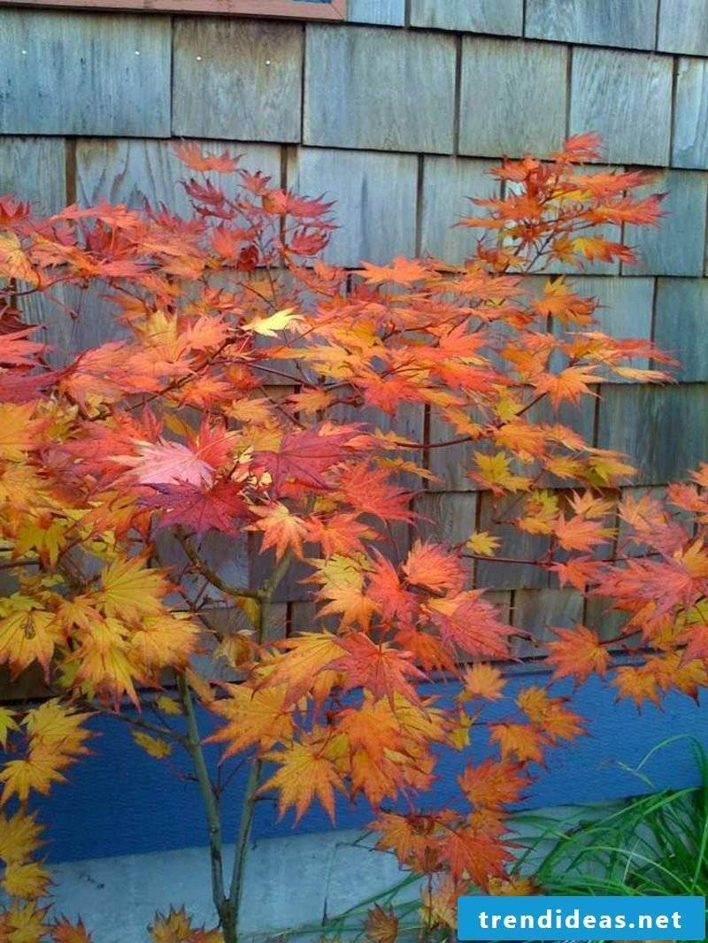Feng Shui garden plants