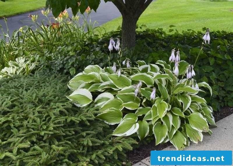 Plant Feng Shui Garden Funkien