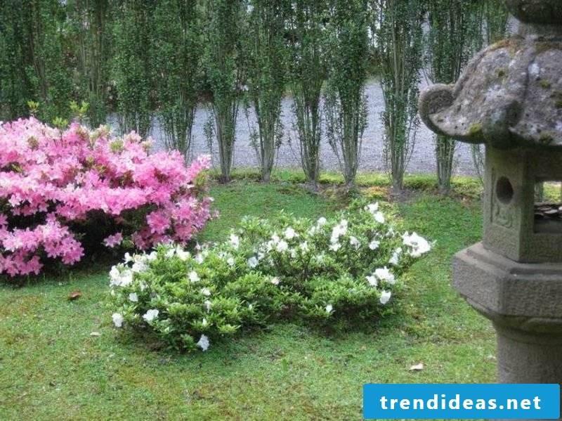 Feng Shui garden rhododendron