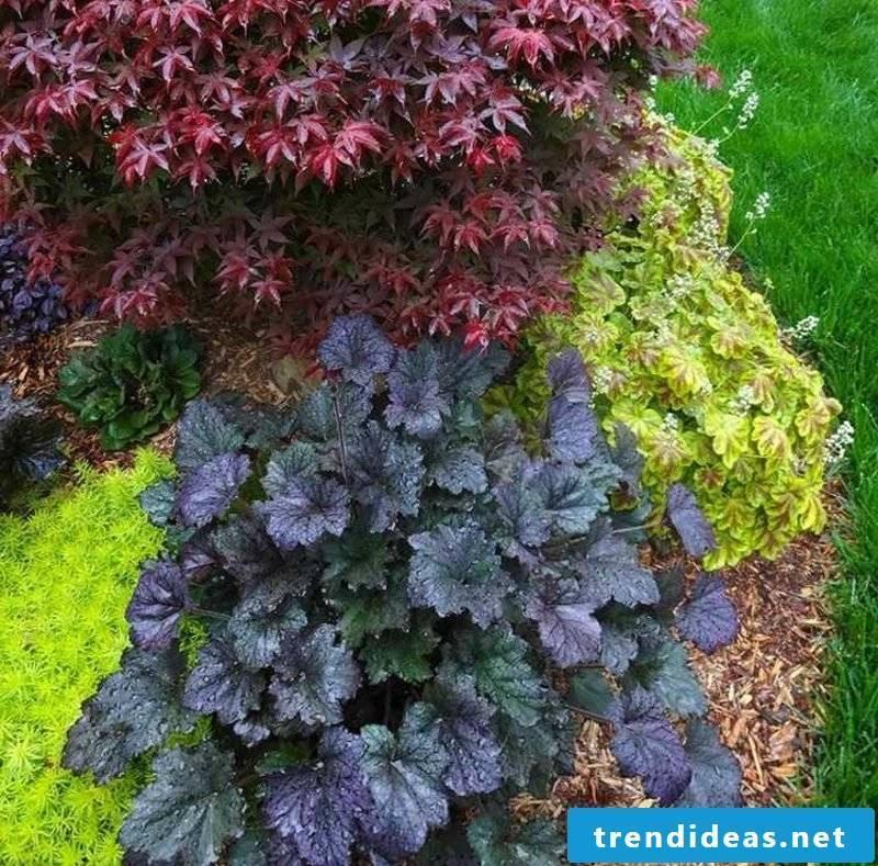 Feng Shui garden design ideas purple bells