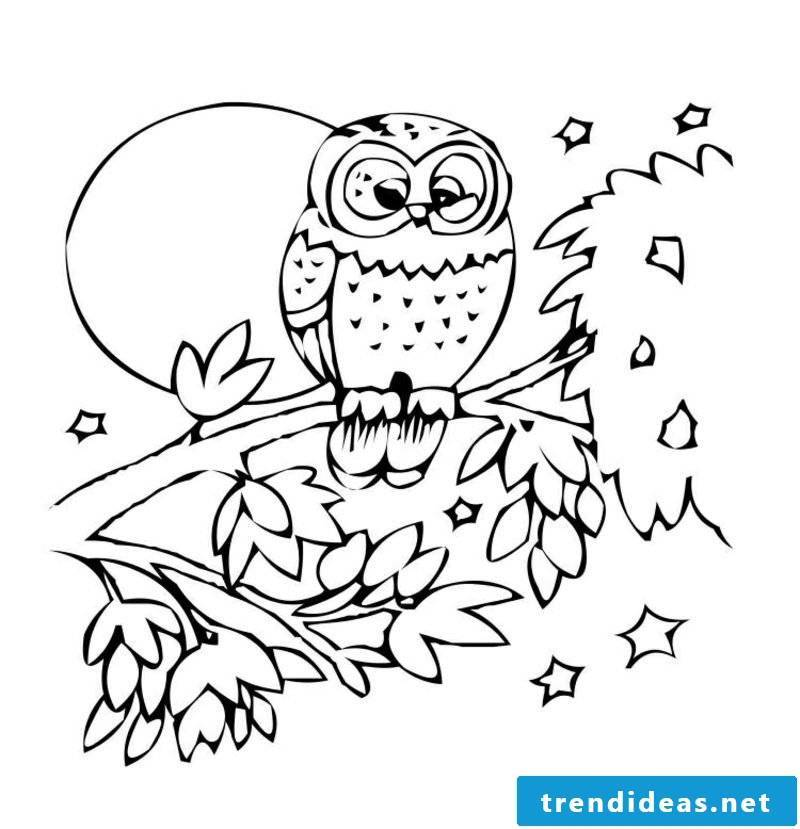 Coloring pictures owl tree