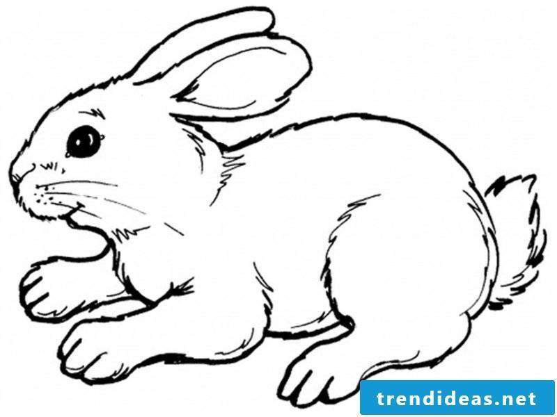 Coloring page for kids bunny