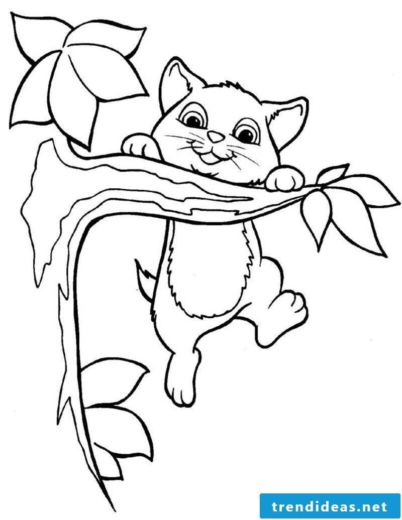free coloring page cat branch