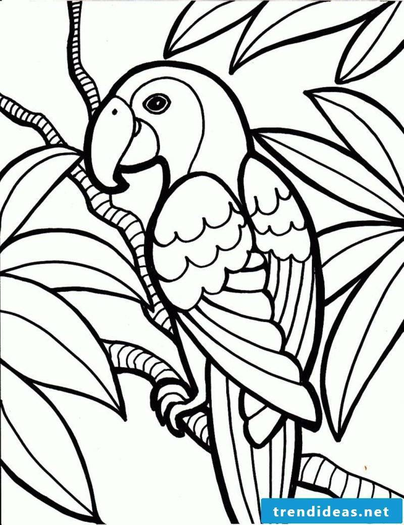 Pictures for coloring parrot