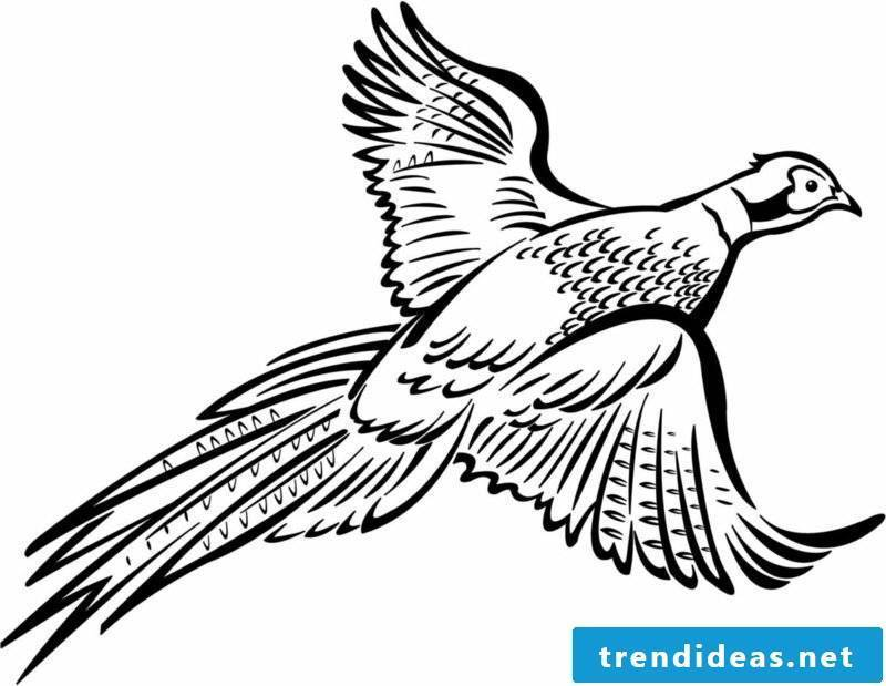 Coloring page for print bird pheasant
