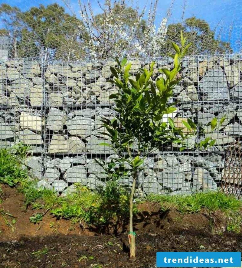 Gabion wall stone original garden design