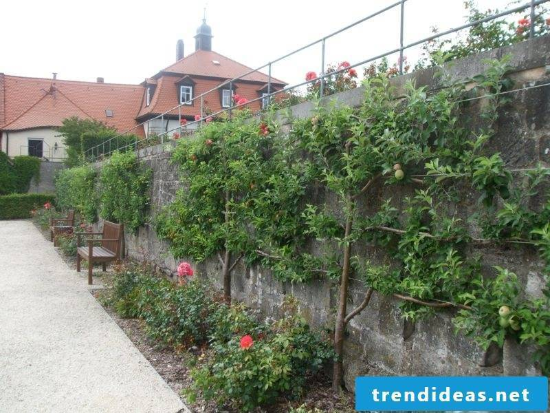 Gartengestaltung Ideas Growing trellises