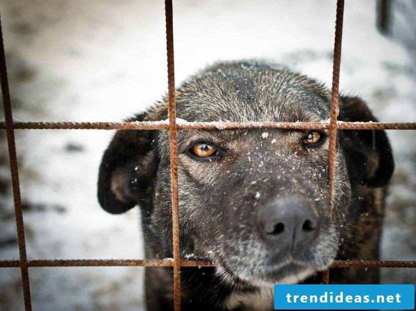 Give the dog freedom: build dog kennels yourself!