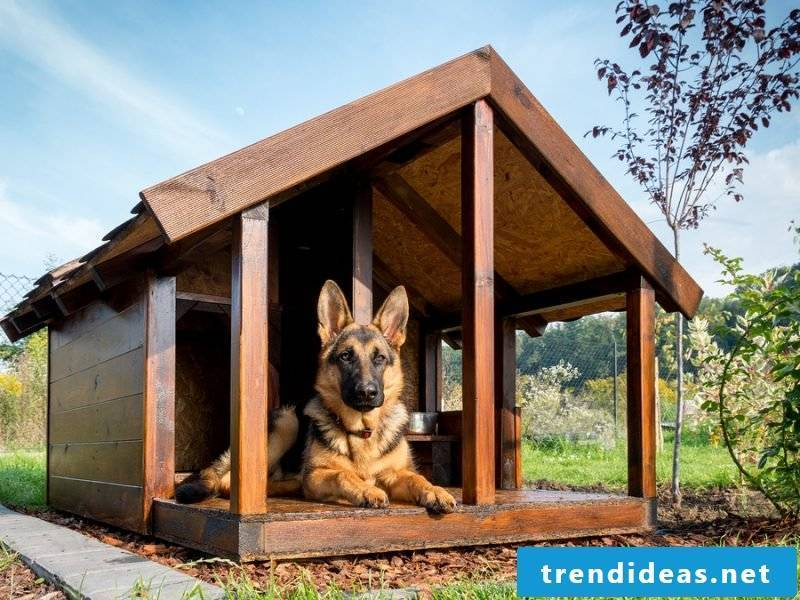 Which dog breeds are suitable for building dog kennels yourself?