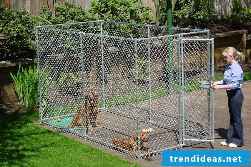 Build dog kennels yourself: What you have to consider!
