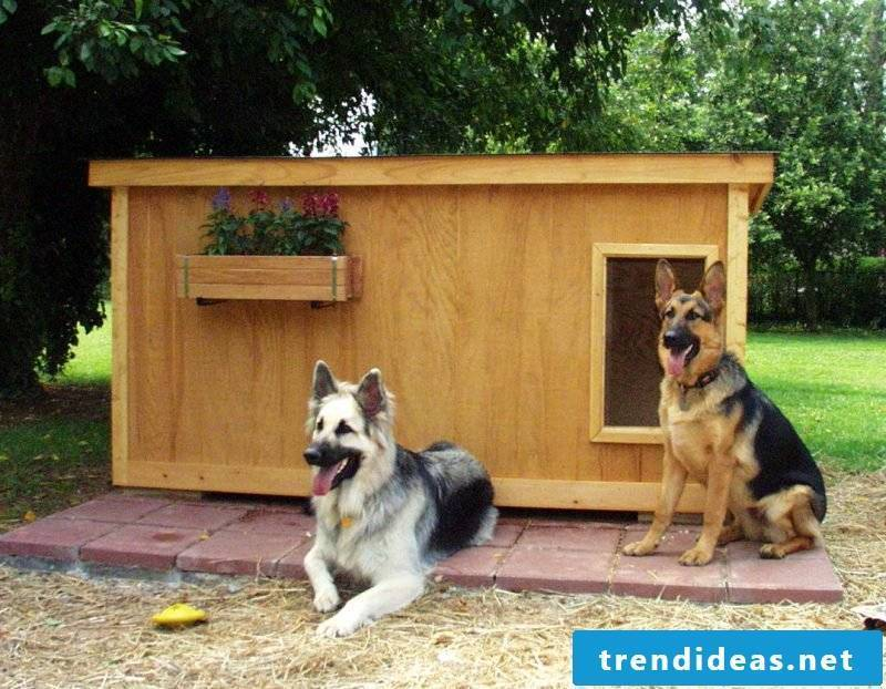 Build dog kennels yourself: made of wood!