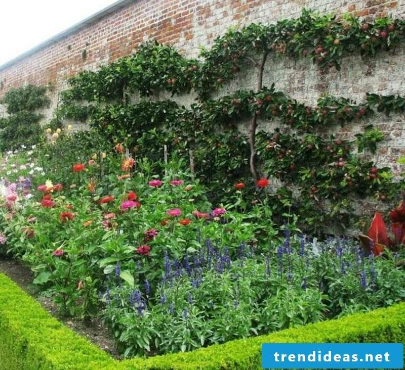 Growing trellis fruit Garden wall