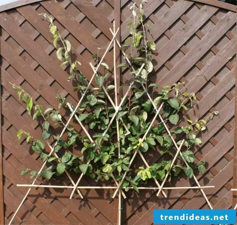 triangular trellis wood